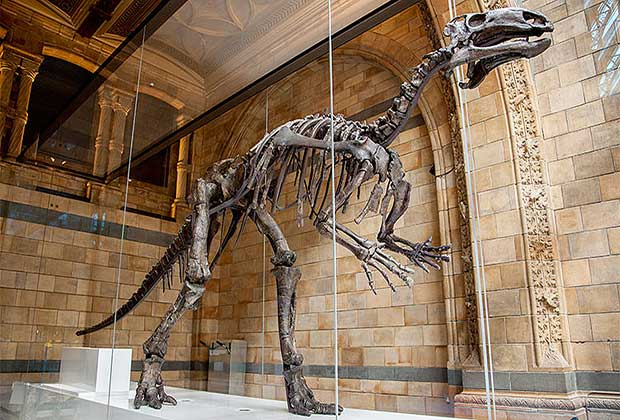 mantellisaurus-Natural-History-Museum-free entrance museum in london